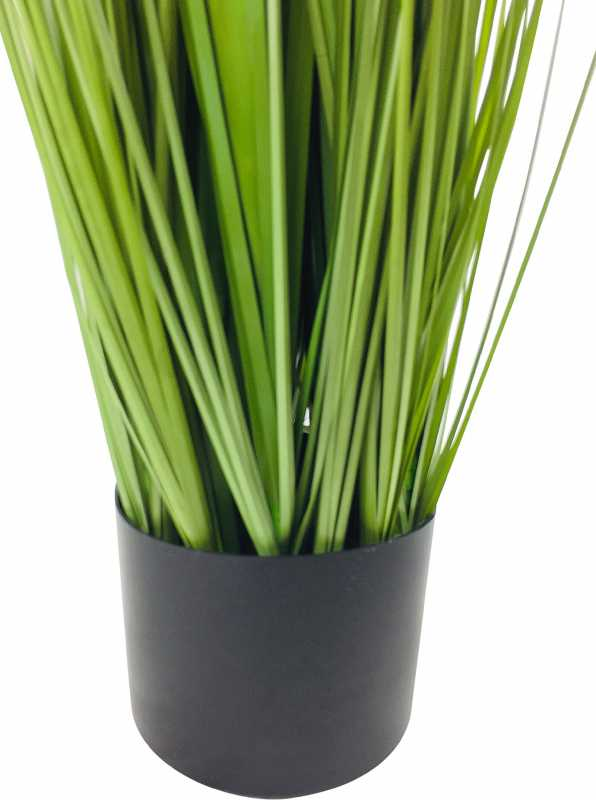 Onion Grass With Pot 113cm